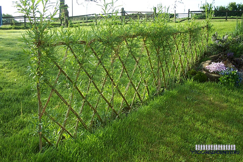 живой плетеный забор